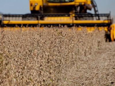Soja: Brasil exportará 75 milhões de toneladas em 2019/20, diz USDA