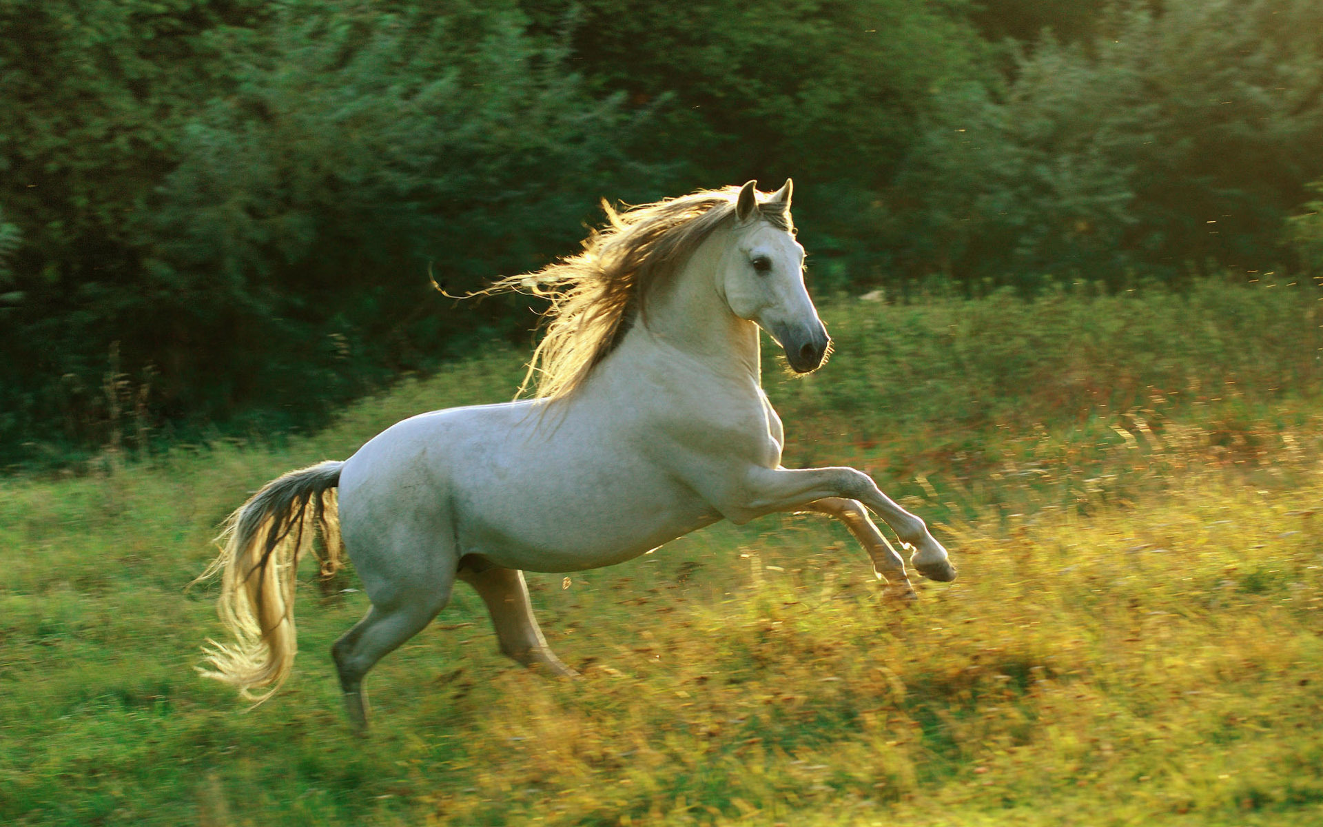 beautiful-horses-13
