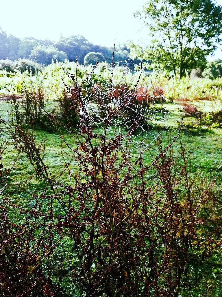spider-webs-autumn