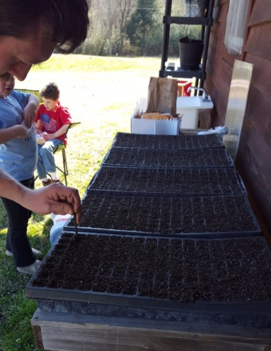 Once the cells are filled with germinating mix, dibbling is optional.
