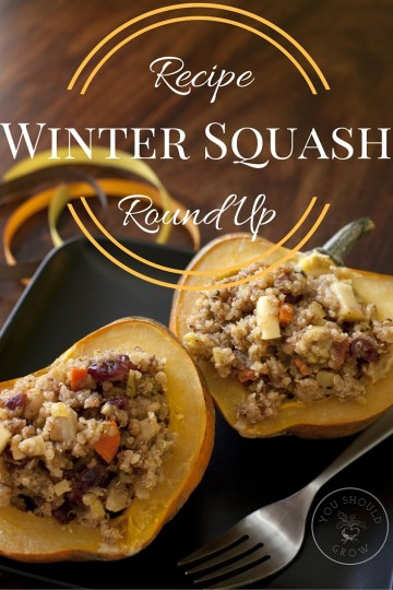 Winter Squash Recipe Round-Up