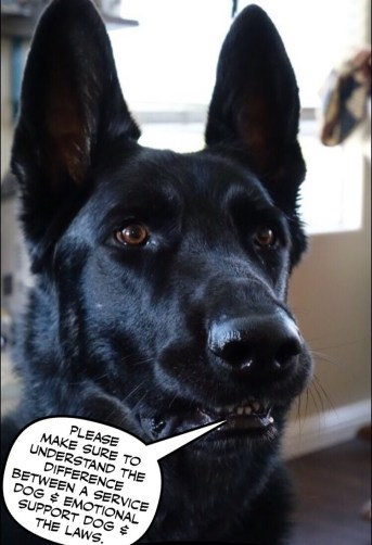 Service-dog-comic-german-shepherd