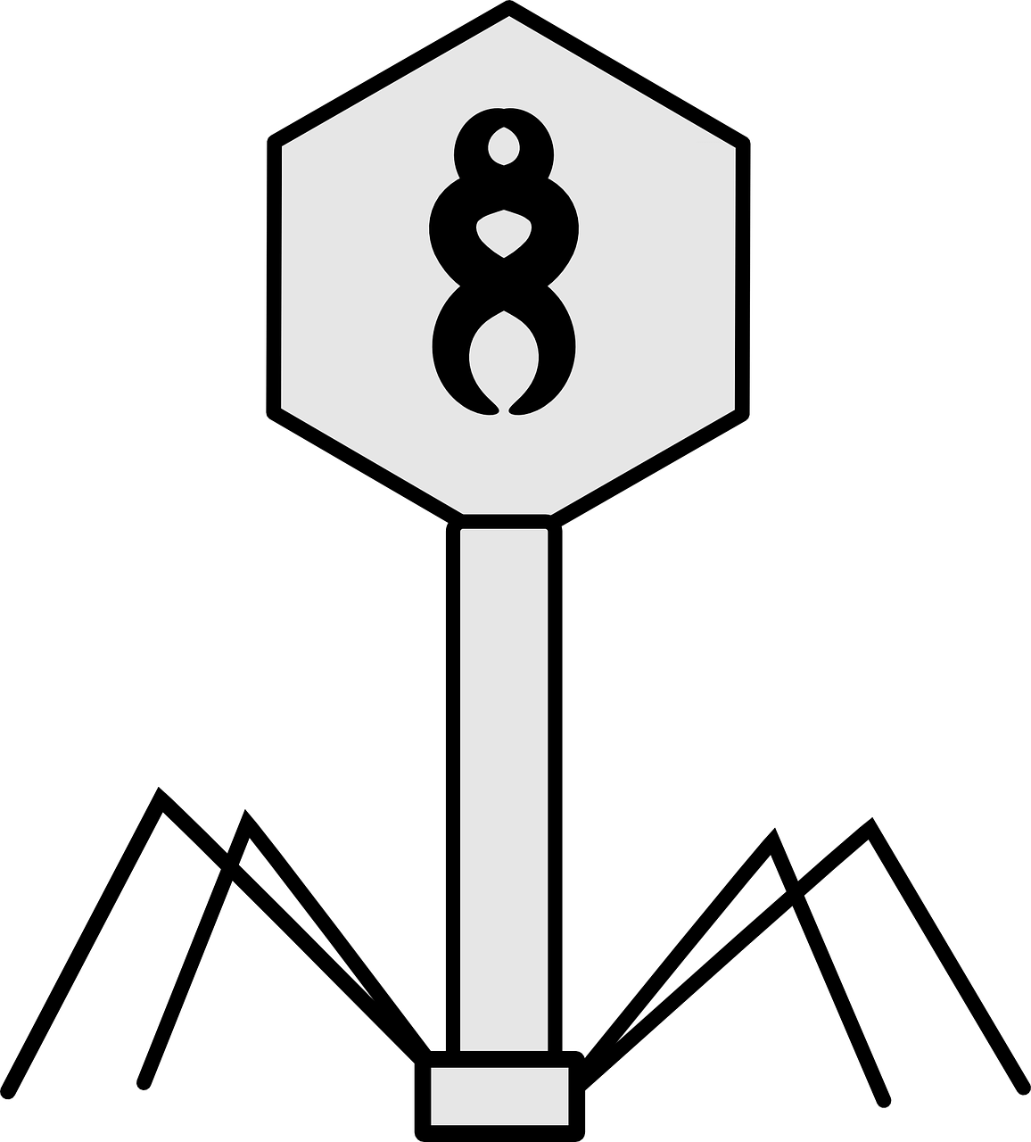 Virus Bacteriophage Science Biology Structure