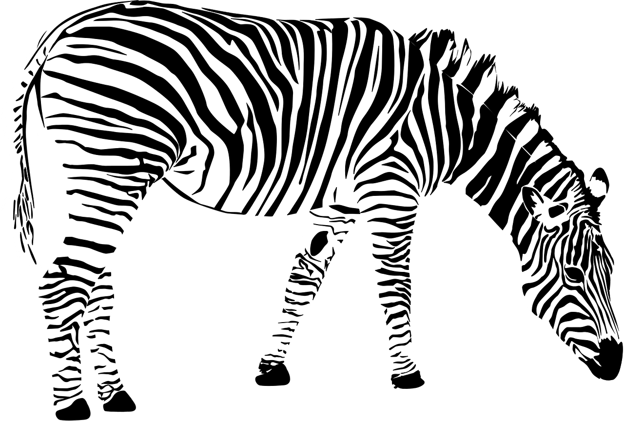 Zebra Africa Animal Black And White Free Vector Graphics