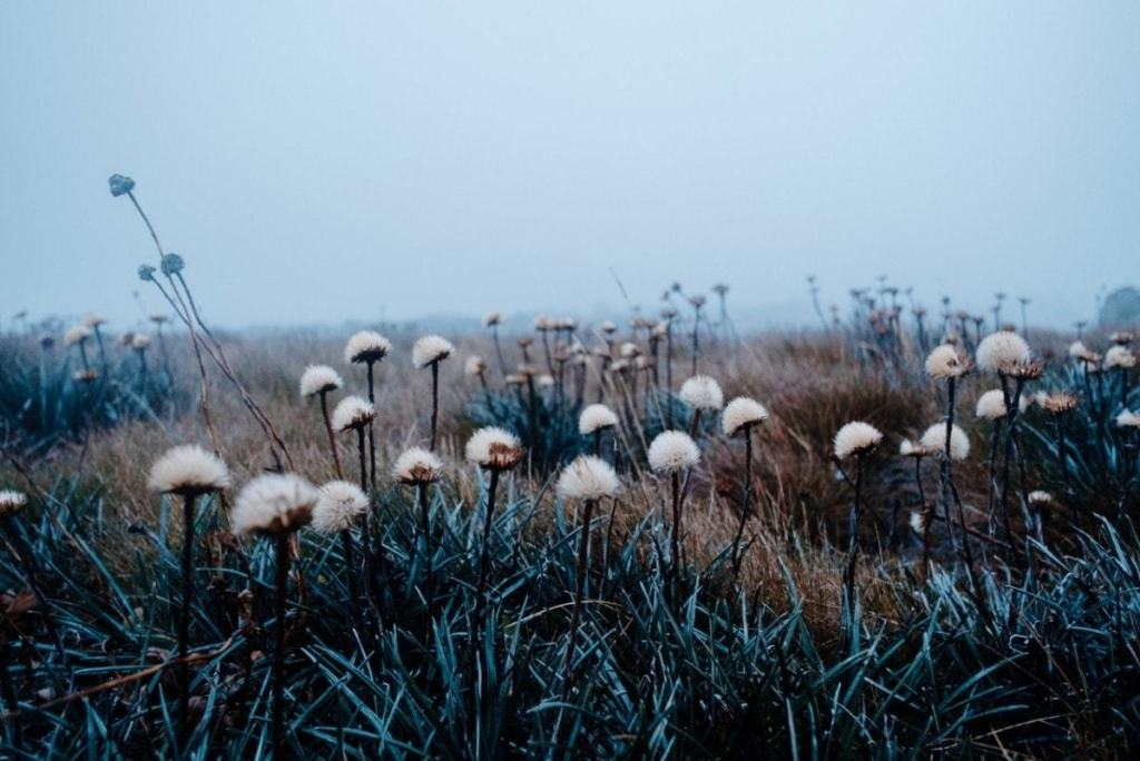 Alpine Sunrise at Kosciuszko Noah Stammbach, seed heads, grass, fog, mist
