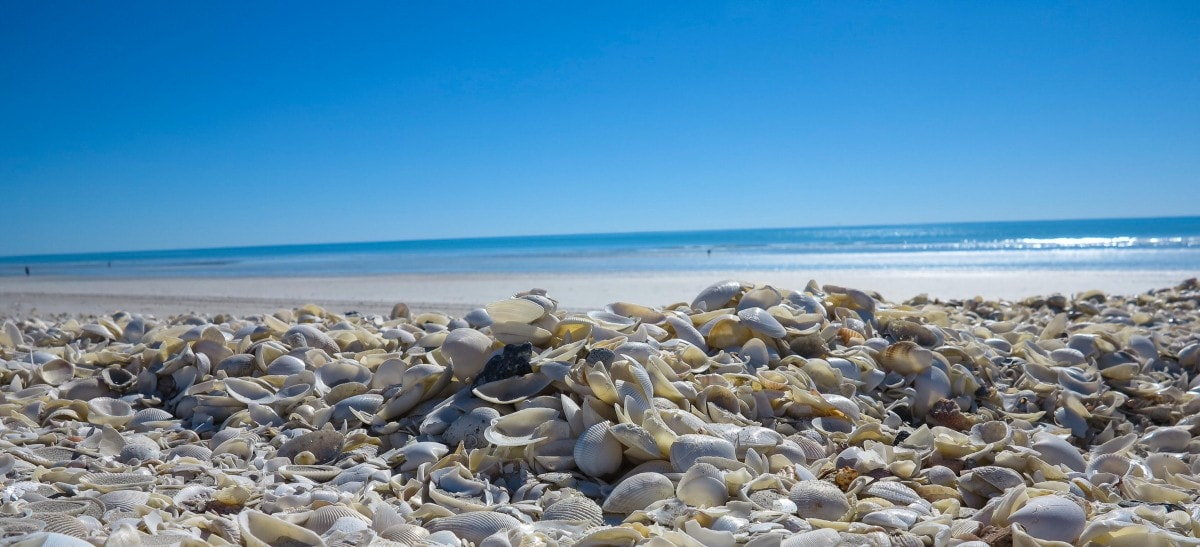 Best Dog Friendly Remote Camping And Fishing In Nsw