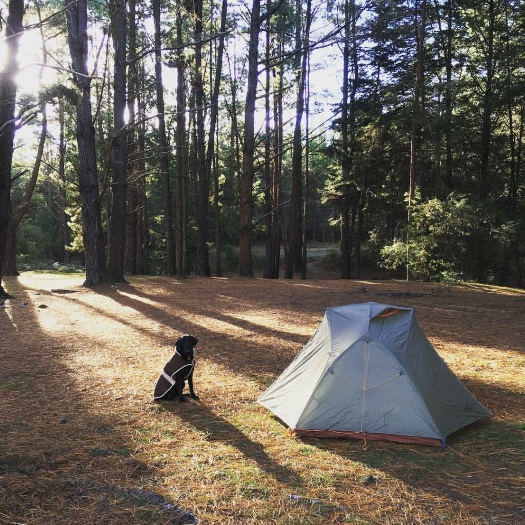 rebecca d'arcy, wingello state forest, dog, camping, dog friendly walks