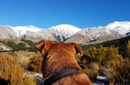 Dog Tails With Oshy // Cuckoo Creek Trail (NZ) Ian Middleton, dog, collar, view, mountains, snow, sky, grass.