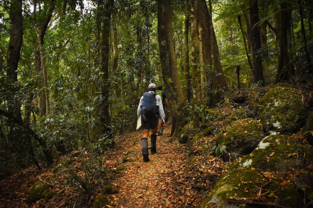 What To Pack For A Marathon Hike Lisa Owen, hiker, trees, track, bush, forest