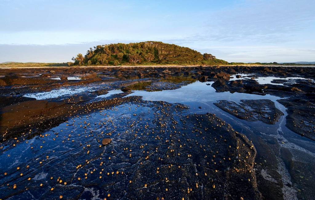 Coastal Sanctuary // Broulee And Broulee Island (NSW), Neil and Gabby Massey, rock pools, seaweed, shellfish, island, trees, water