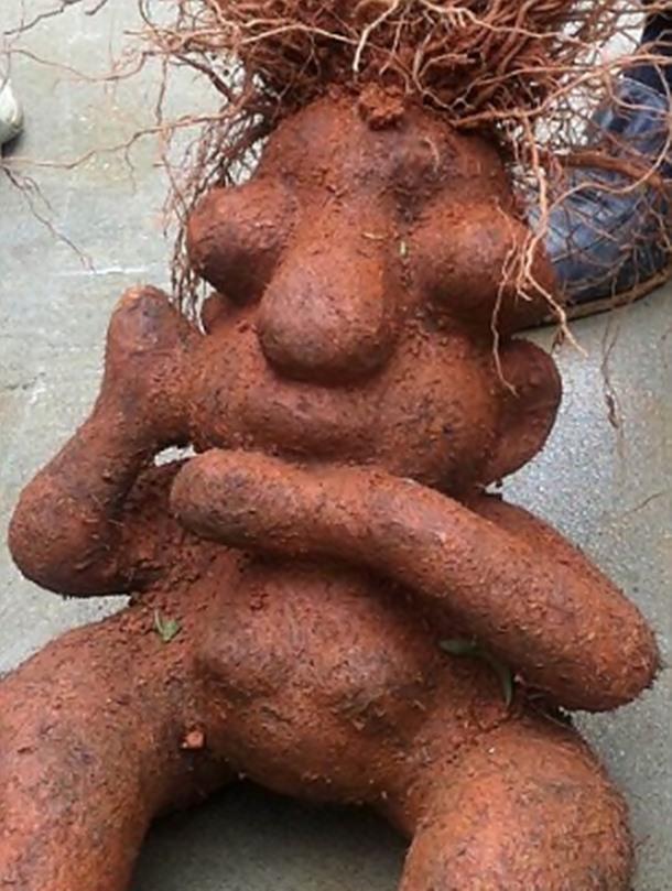 Imagini pentru poze cu legume ciudate