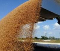 Экспорт зерна принес Украине за год $6,4 миллиарда
