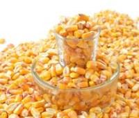 Украина может собрать рекордный урожай кукурузы, – Минагрополитики