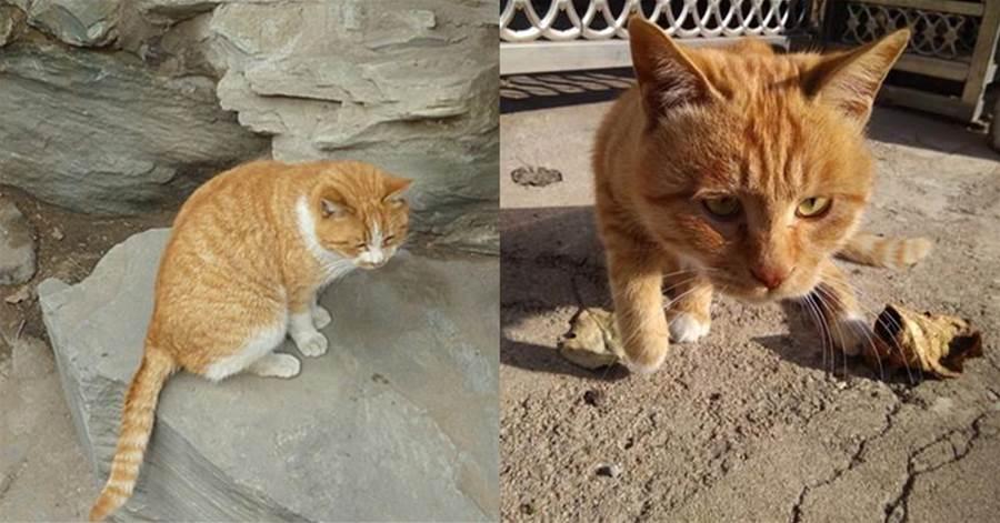鏟屎官投喂橘貓大半年,誰叫他他都會回應,最小的奶牛貓是老三。奶牛貓是非常有趣的一種貓咪,身上有橘,肥美大屁屁全被看光光~ | CatCity 貓奴日常