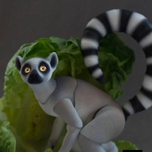 lemur_bjd_11