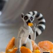 lemur_bjd_8