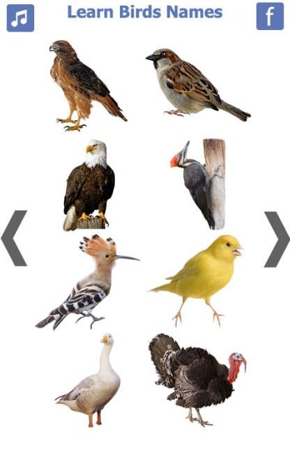 Birds name in English (4)
