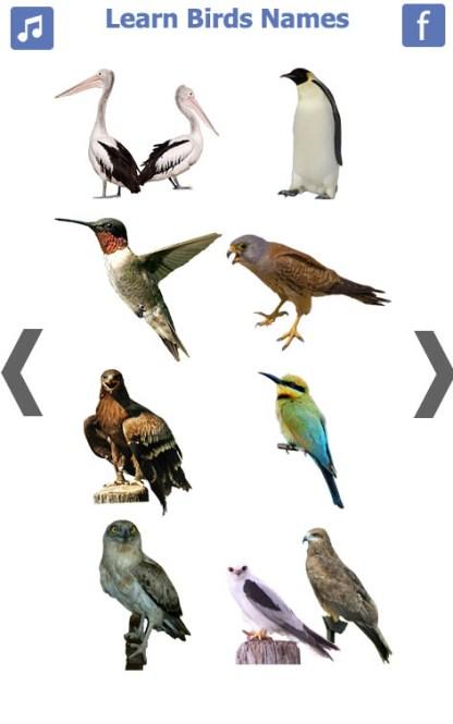 Birds name in English (5)