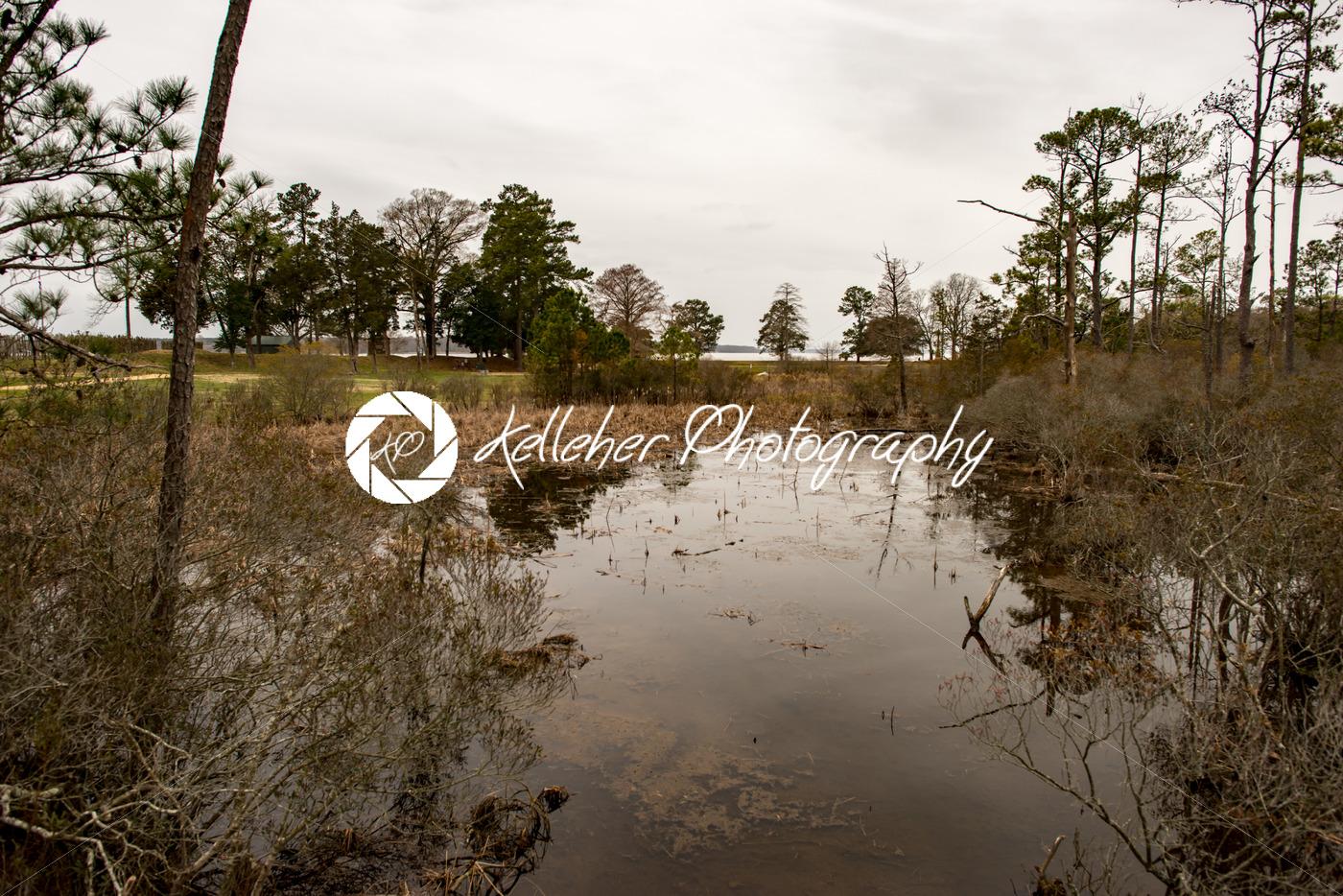Swamp lake and trees in Jamestown, Virginia - Kelleher Photography Store