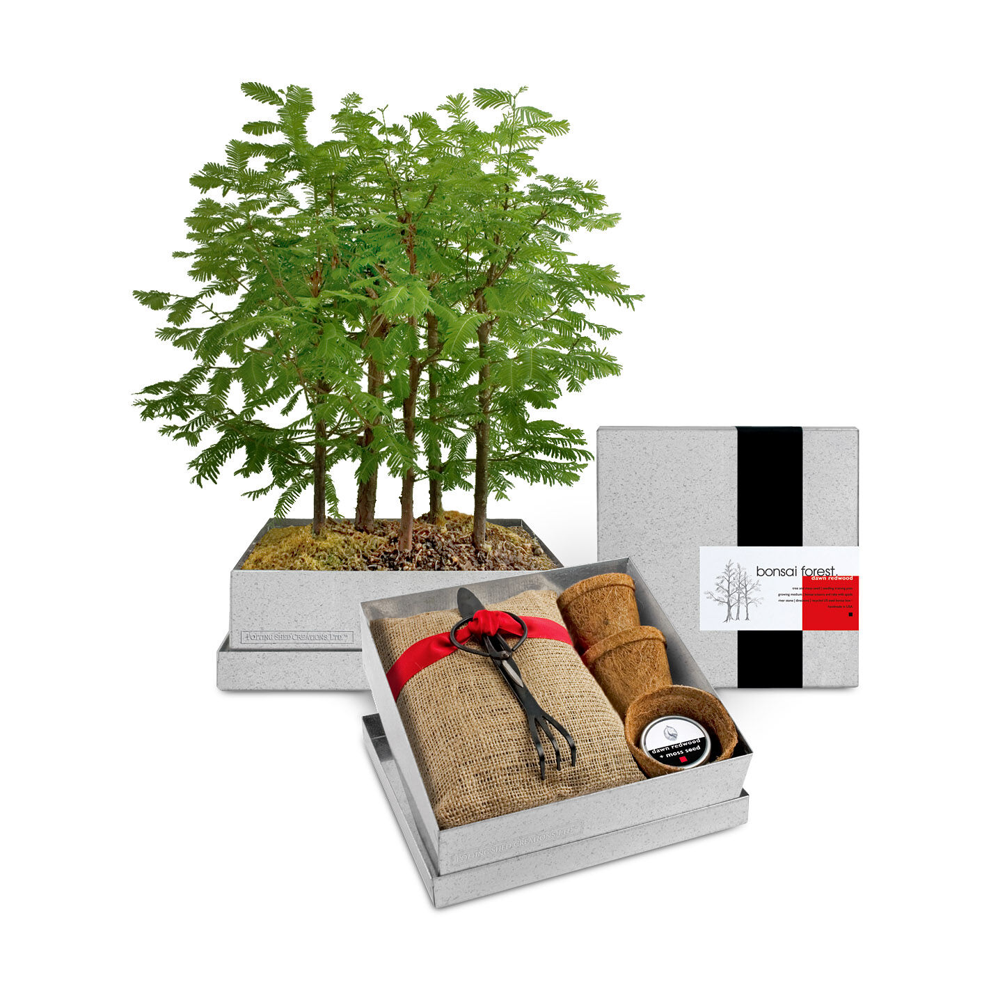 Bonsai Forest Growing Kit MoMA Design Store