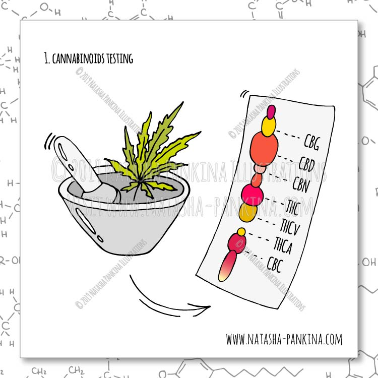 description: Hand Drawn Illustration of Cannabinoids Testing  keywords: bag, ban, cannabidiol, cannabis, cartoon, cbd, cbd oil, chemical formula, chemistry, design, design element, doodle, flat, freehand drawing, graphic, hand, hand drawn, icon collection, icon set, illustration, isolated, joint, laboratory, laboratory equipment, leaf, legal concept, legalization, lighter, marijuana, marijuana leaf, marijuana plant, medical marijuana, molecule, object, outlined, packaging, pipe, set, sign, sketch, smoke, speech bubbles, steam, stop, symbol, syringe, tube, vector, vector elements, weed, analysis, laboratory, lab, cannabinoids, testing, moisture content, residual solvents, processing chemicals, pesticides, microbial impurities, homogeneity, edible, cannabis products, foreign material, terpenoids, mycotoxins, heavy metals, water activity, solid, semi-solid edibles, THC, delta-9 THC, CBD, natasha pankina  illustrator: Natasha Pankina Natasha Pankina https://store.natasha-pankina.com/copyright-notice-per-image-metadata/
