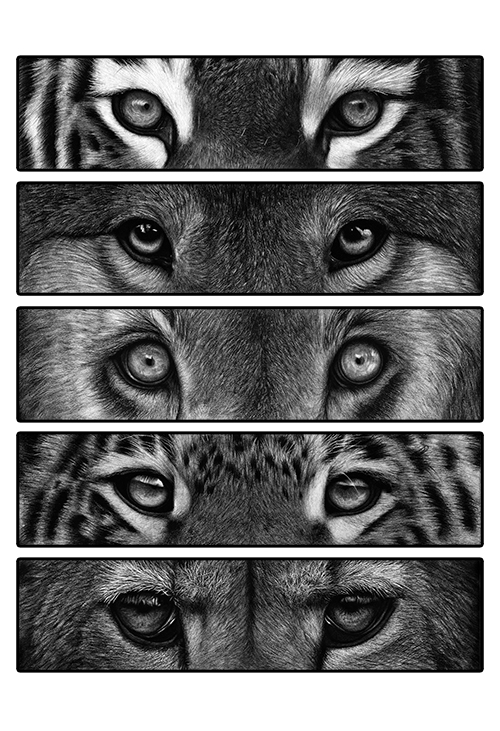 How To Draw Jaguar Eyes