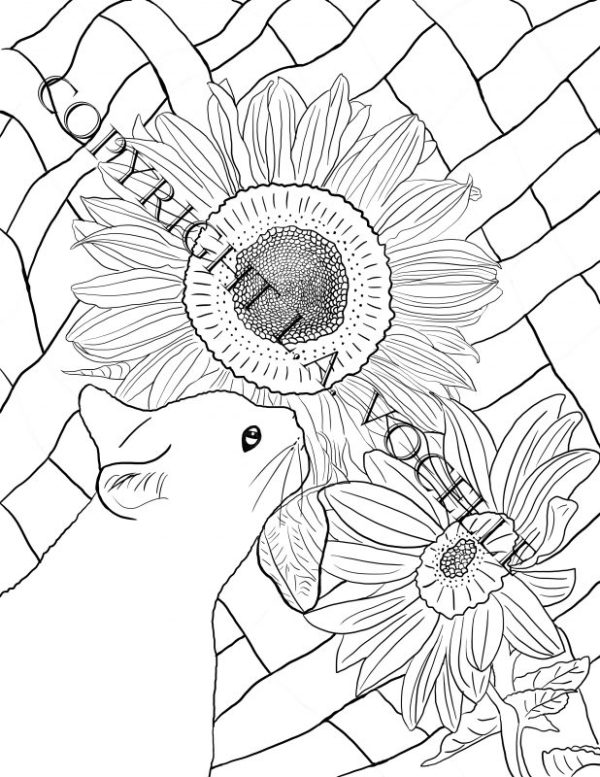 2 Copyrighted-Cat and Sunflowers from Cats and Flowers Coloring Book by L.A. Vocelle