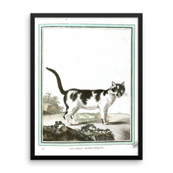 Georges LeClerc Buffon: Chat Domestique, 18th Century, Framed Cat Art Poster, 18×24