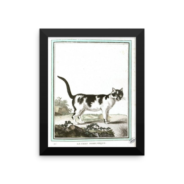 Georges LeClerc Buffon: Chat Domestique, 18th Century, Framed Cat Art Poster, 8×10