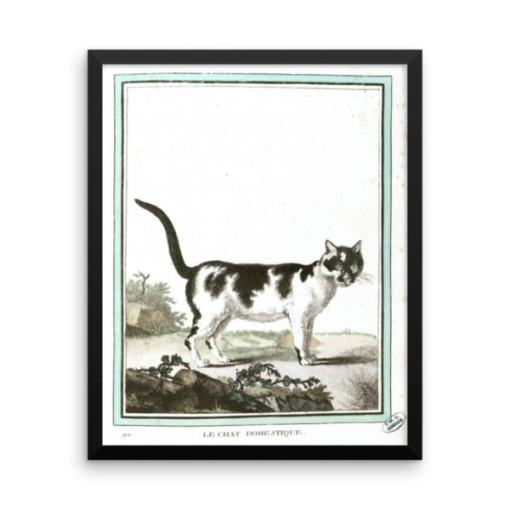 Georges LeClerc Buffon: Chat Domestique, 18th Century, Framed Cat Art Poster,