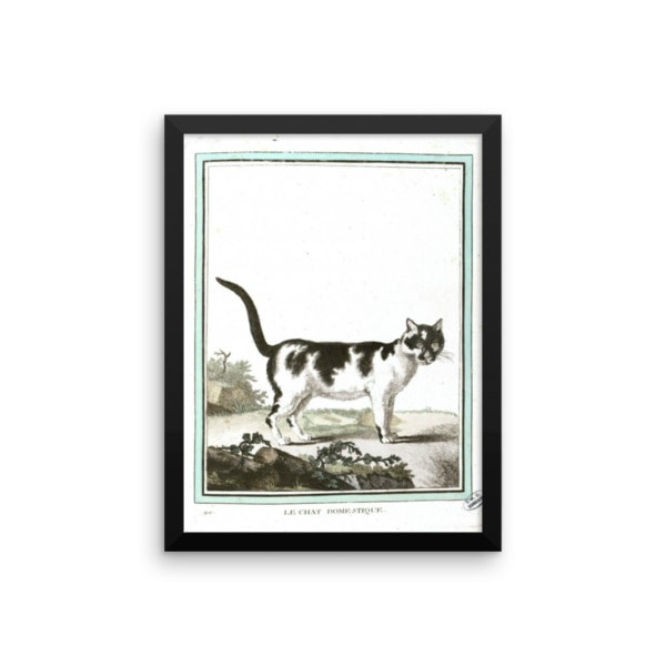 Georges LeClerc Buffon: Chat Domestique, 18th Century, Framed Cat Art Poster, 12×16