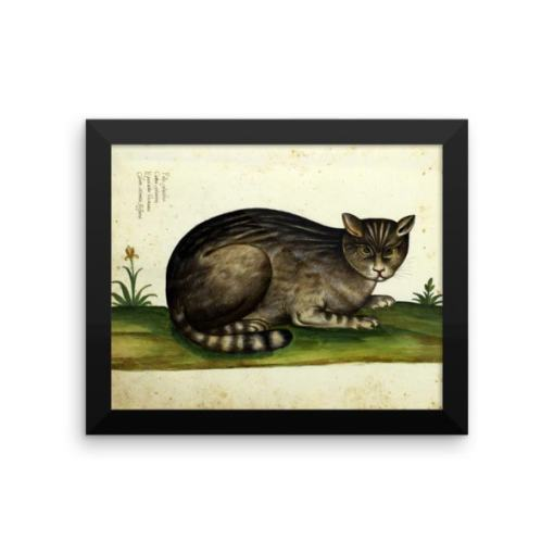 Ulisse Aldrovandi: Wild Cat from Natura Picta, 16th Century, Framed Cat Art Poster