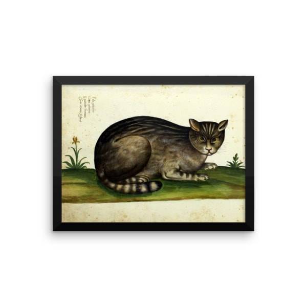 Ulisse Aldrovandi: Wild Cat from Natura Picta, 16th Century, Framed Cat Art Poster, 12×16