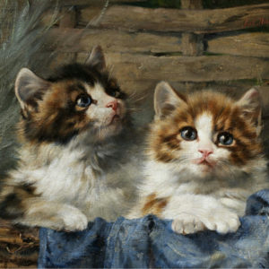 Fine Cat Art Canvas Prints and Posters,