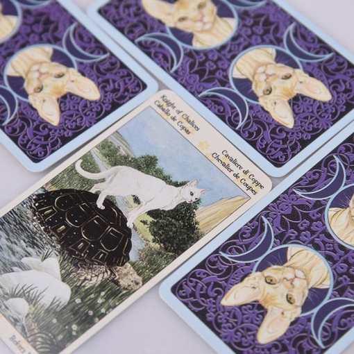 cat tarot cards