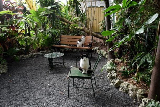 Hemingway home and museum  Cat Lover's Bucket List