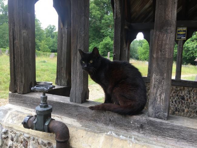 devout cat