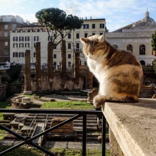 Rome cat