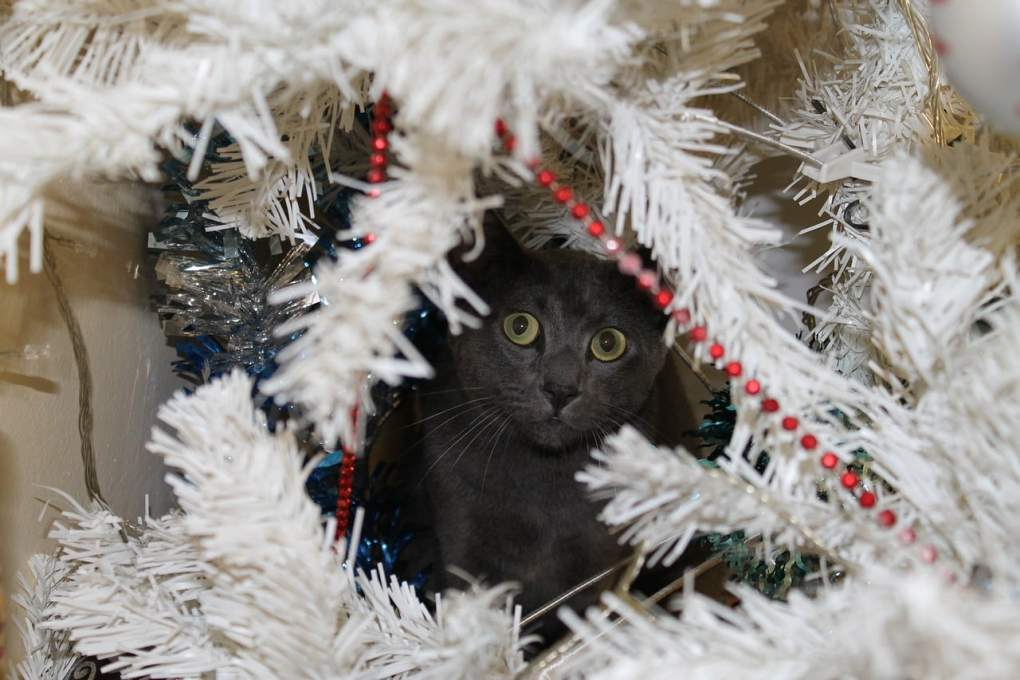 How to Survive Christmas with a Cat