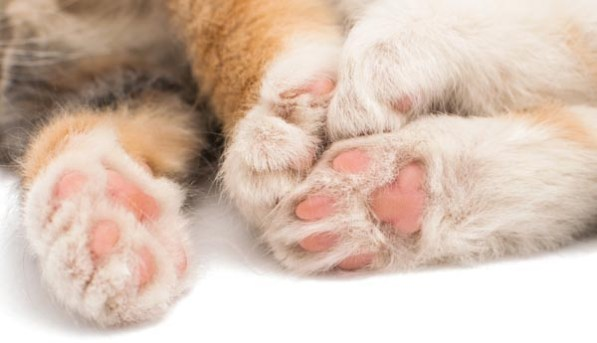 Purrfectly Fascinating Cat Facts