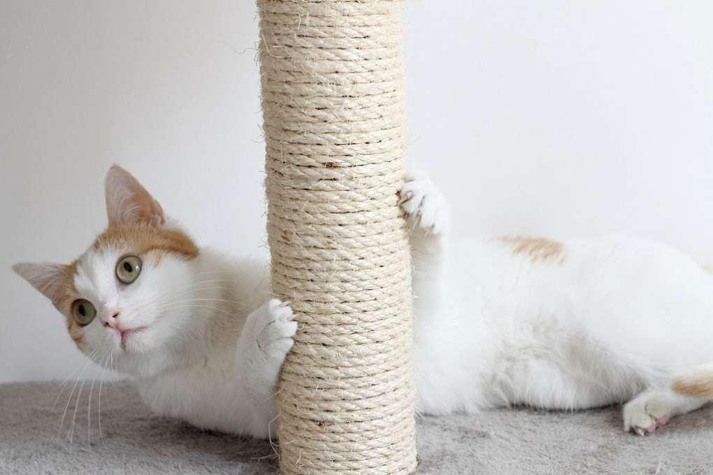 cats scratch