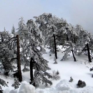 December Digital Photo - The Island of Cyprus