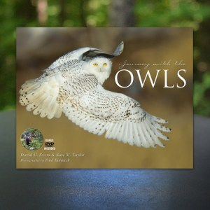 Journey with the Owls