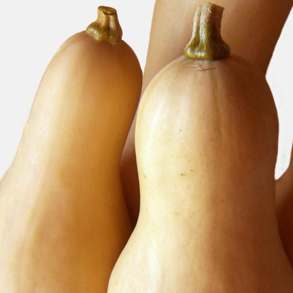 Butternut squash seed