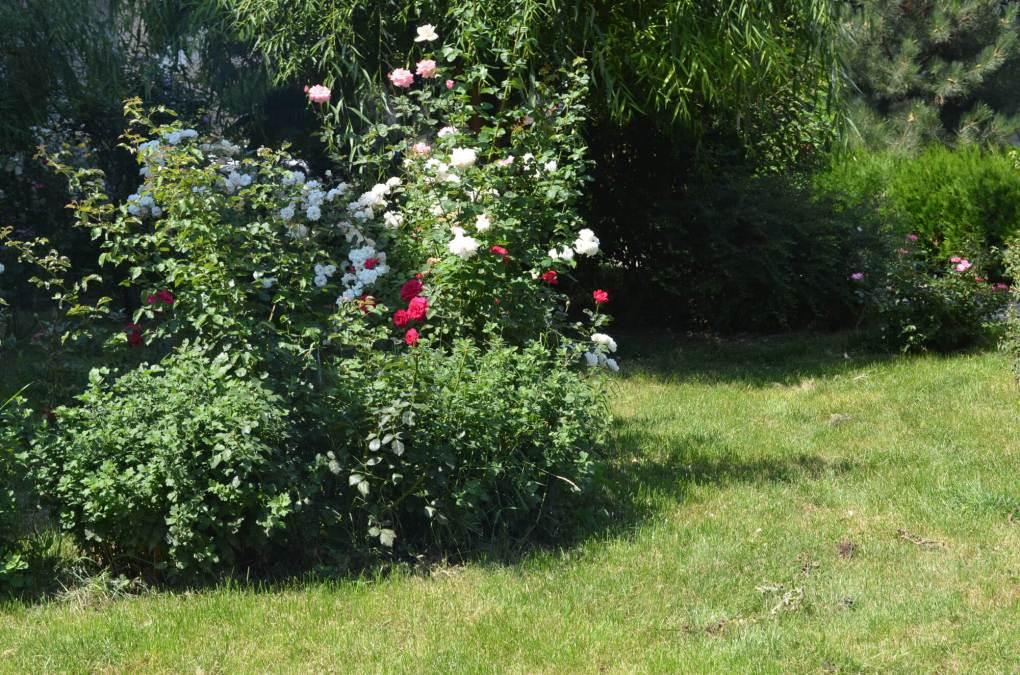 flori ramnicu sarat