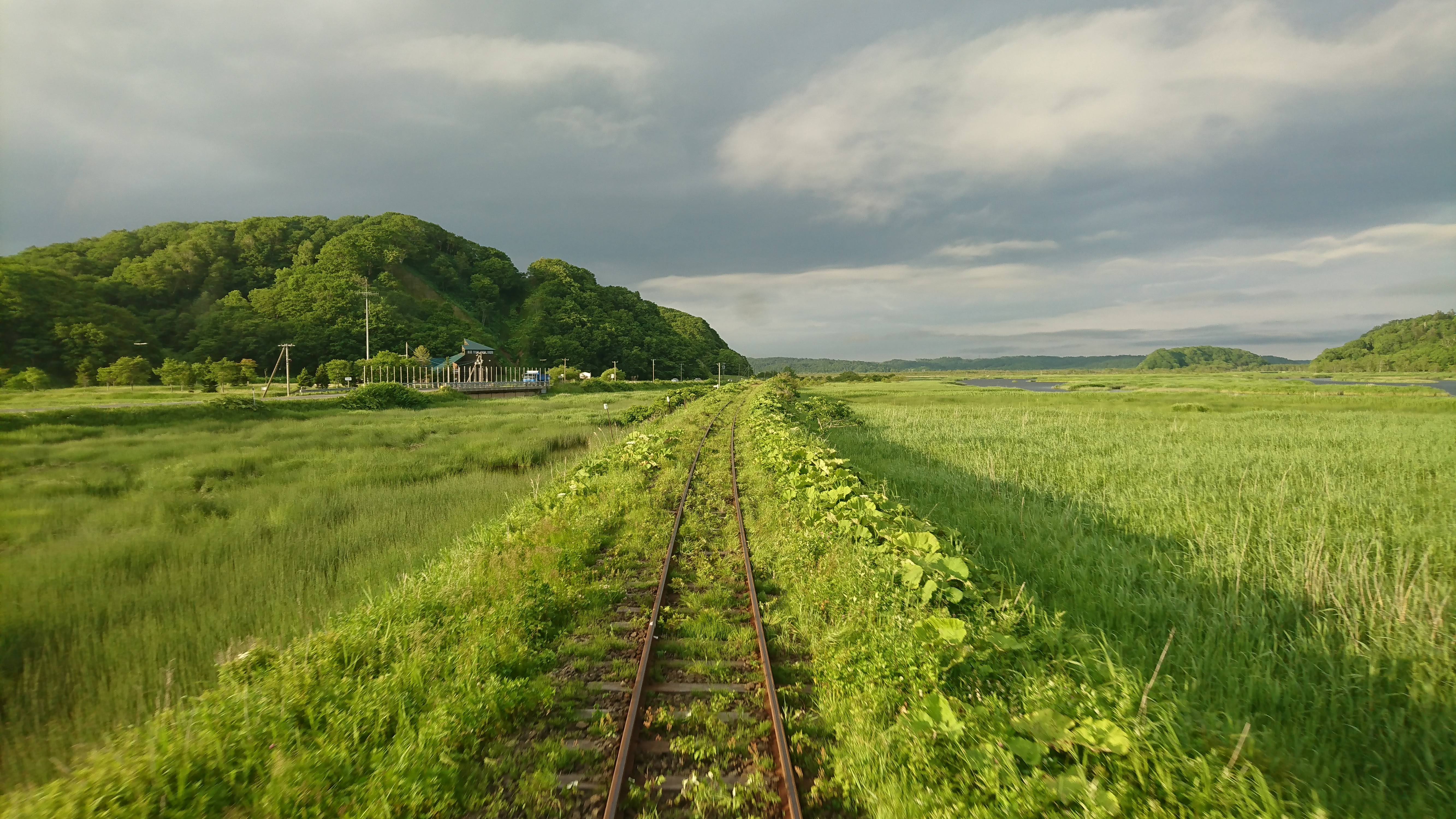 Tracks through marshland