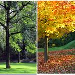 seasons-1-2206c91