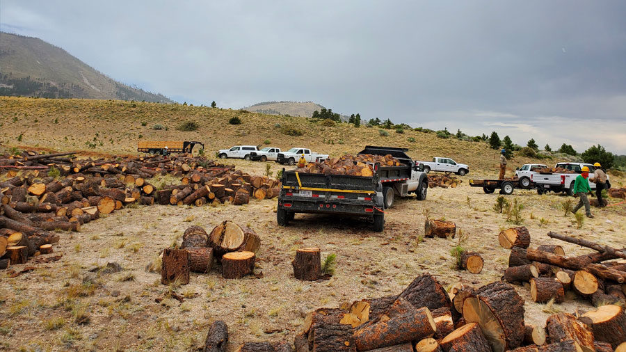 Logs that have been cut down into shorter pieces are in the foreground of a field, with white trucks parked behind them and a couple of people in hard hats are walking around.