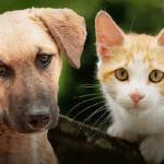 Animal Abuser Registry