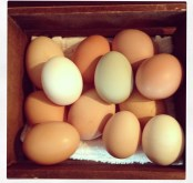 A beautiful egg bounty